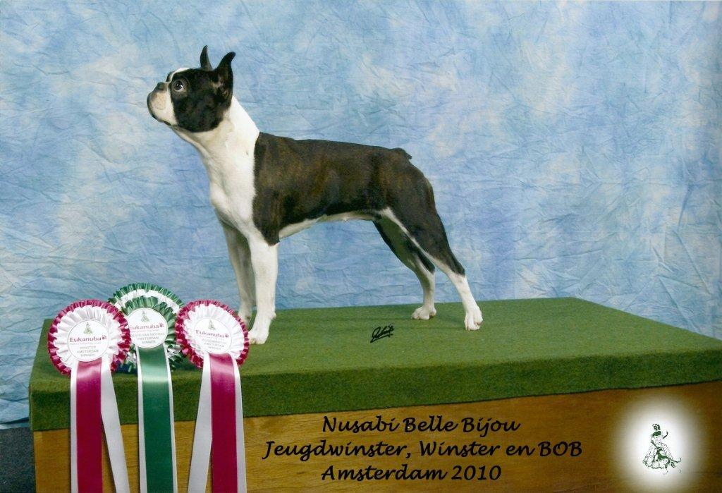 Belle is Jeugdwinster en Winster 2010 en werd BOB